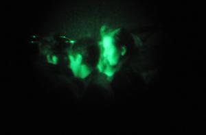PDI - visores nocturnos