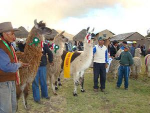 General Lagos - Camelidos