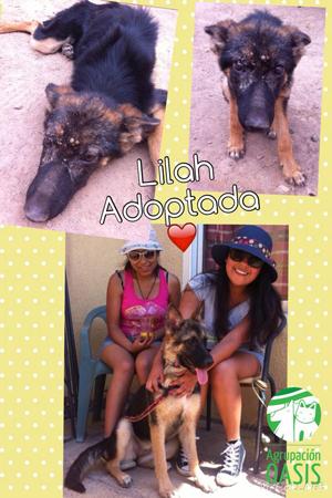lilah_perrita_adoptada