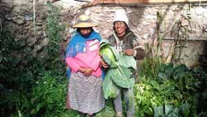 Miembros de la familia Alave en su plantación de repollos
