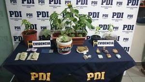 pdi_marihuana_maceteros
