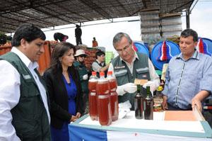 Intendenta regional Gladys Acuña, en plena fiscalización de la chicha