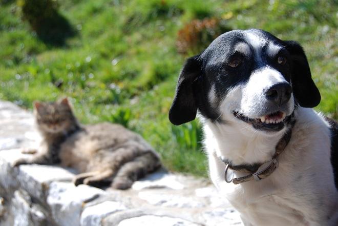 Perro y Gato – Southpoint