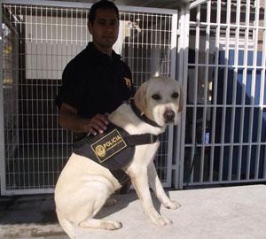 Canino 2