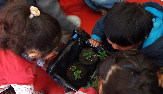 Niños Plantas Medicinales